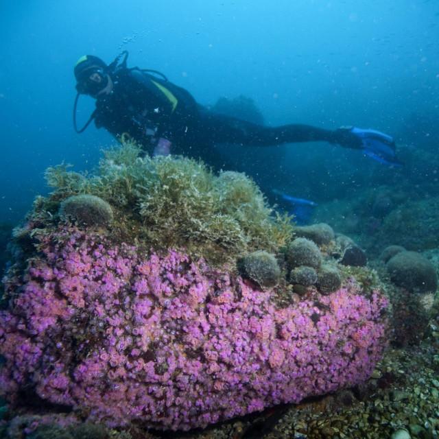 """Zaron na """"podmorsko ušće"""" rijeke Cetine na lokalitetu Vrulja između Brela i Omiša spada u atraktivnije zarone u Dalmaciji"""