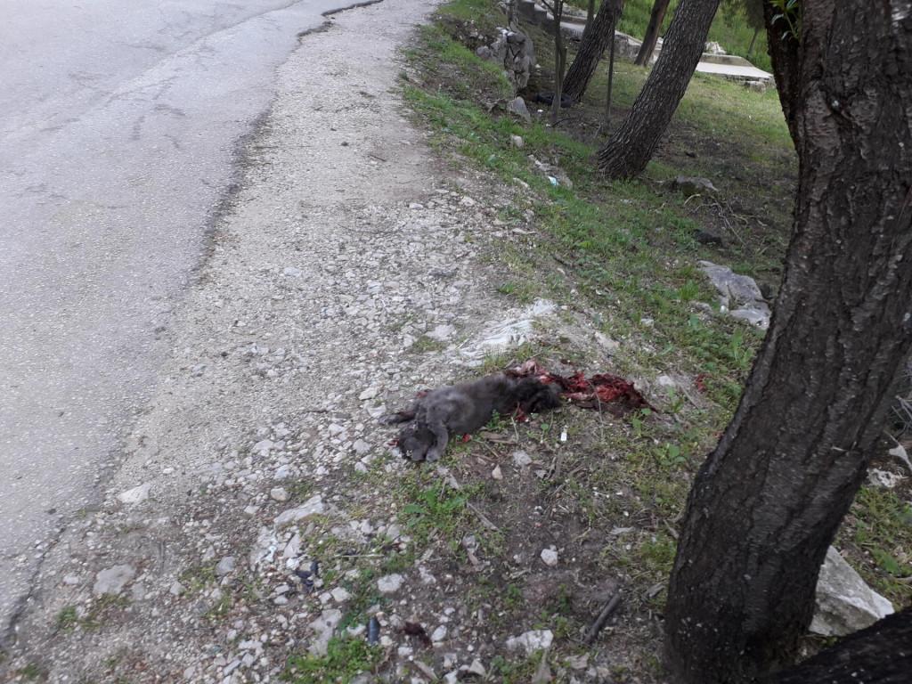 Lešina pregažene mačke bačene s nadvožnjaka