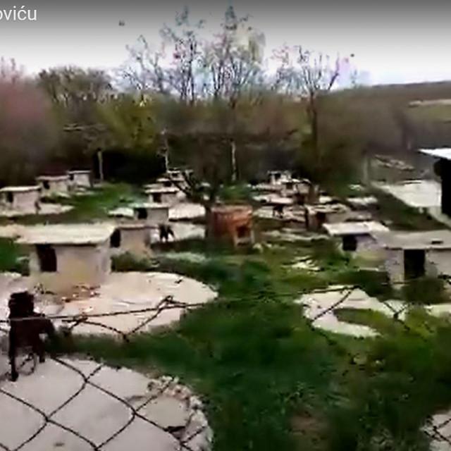 Psi u Smokoviću