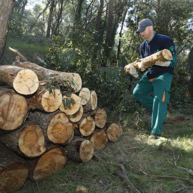 Javna ustanova trebala bi dobiti šumskog radnika i šumara