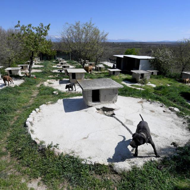 Veterinarska inspekcija Državnog inspektorata obavila je inspekcijski nadzor na uzgajalištu pasa u Smokoviću