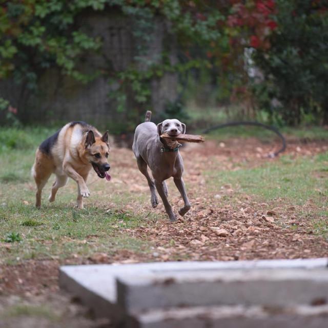 Psi će moći uživati u igri na Bilom Brigu