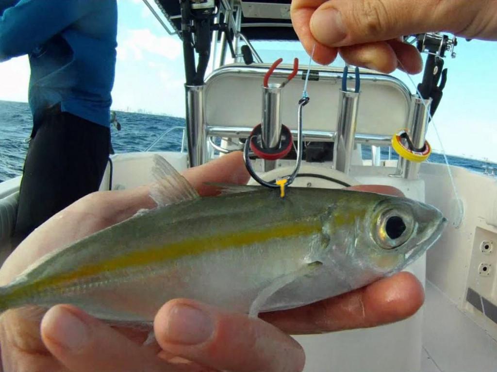 Najbolji način vezivanja za <em>drifting </em>živom ribom