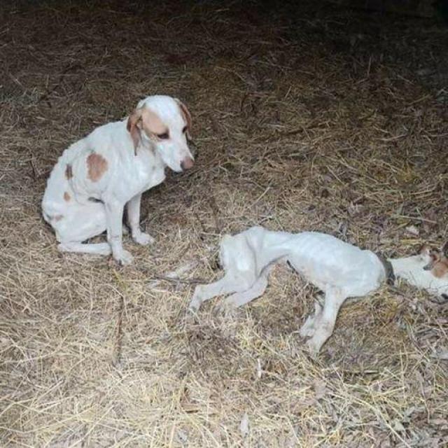 Psić je preminuo od gladi, drugi ga je čuvao...