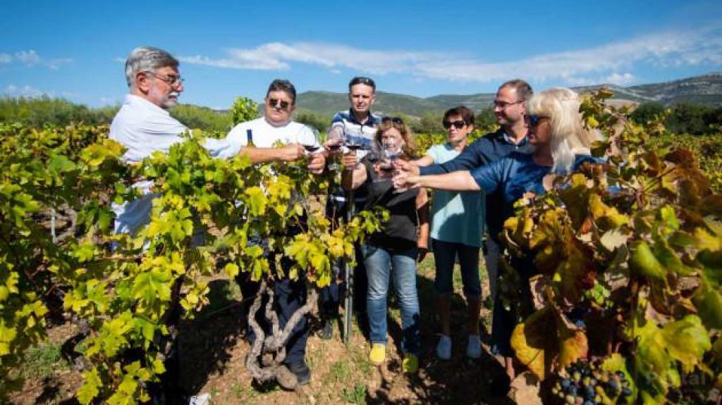 Zdravica za kaštelanski Crljenak u vinogradu gdje se prije 20 godina otkrio trs koji je predak kalifornijskom Zinfandelu