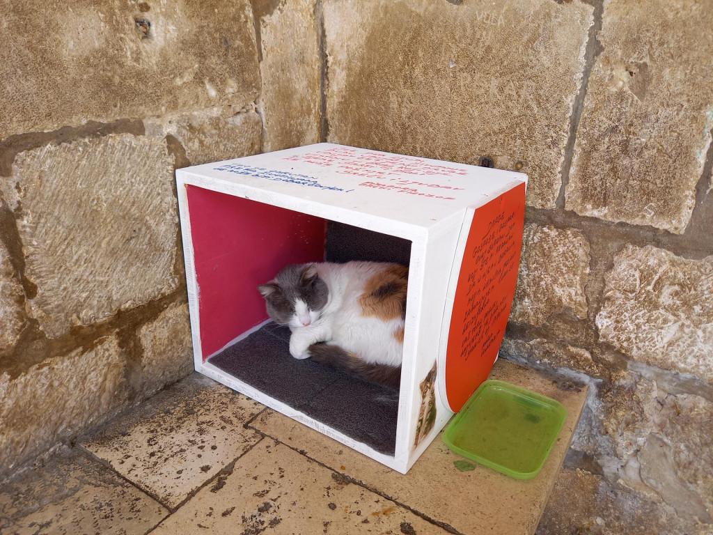 Vremešna mačka Anastazija dobila je komforan dom