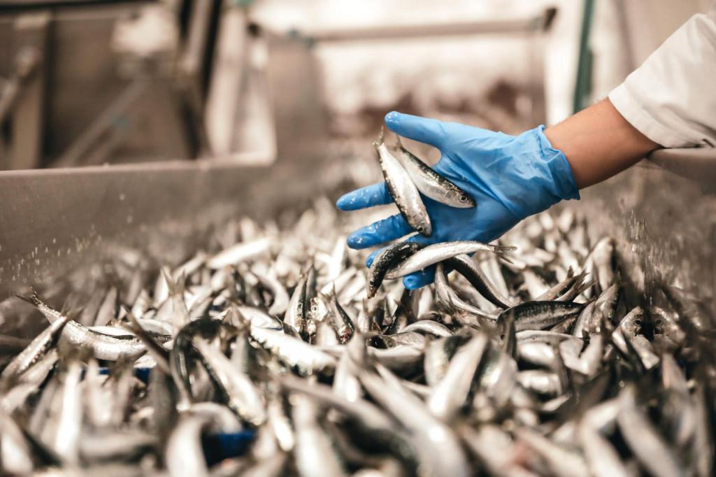 Pogoni ribarske zadruge Omega 3