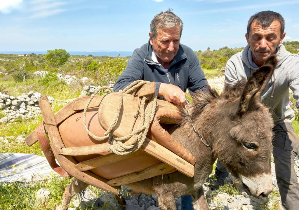 Dario Gruja uz pomoć Malog Ive pokušava staviti samar na magaricu