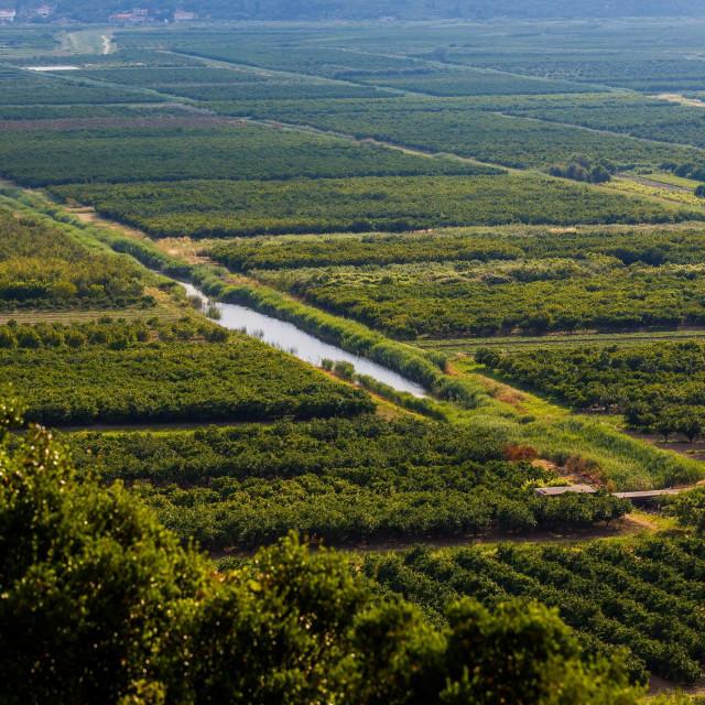 Državne parcele na kojima su plantaže mandarina dijelit će se nakon izbora<br />