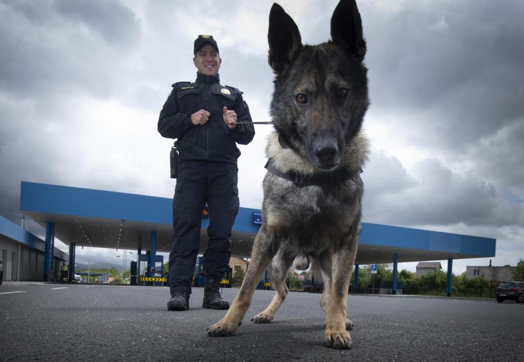 Wolf i njegov vodič, policajac Frano Matkov
