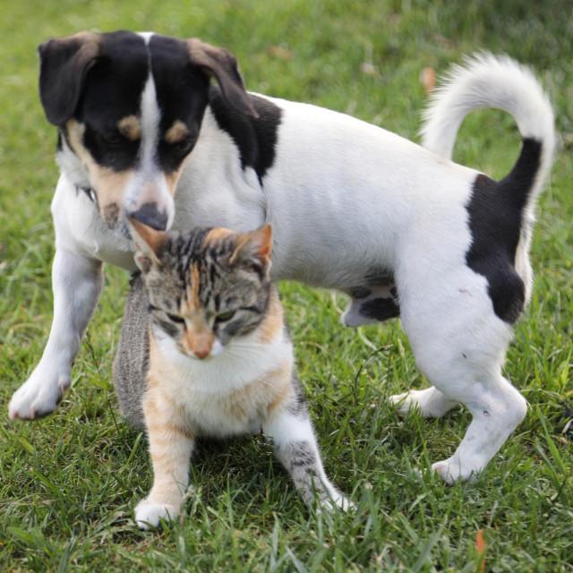Mačak Micon i kučak Šapa