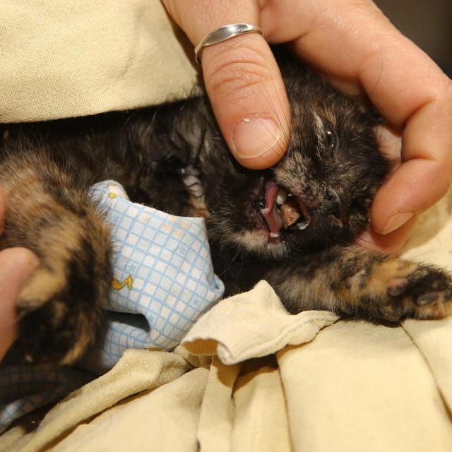 Spašavanje ozlijeđenog mačića u Splitu<br />