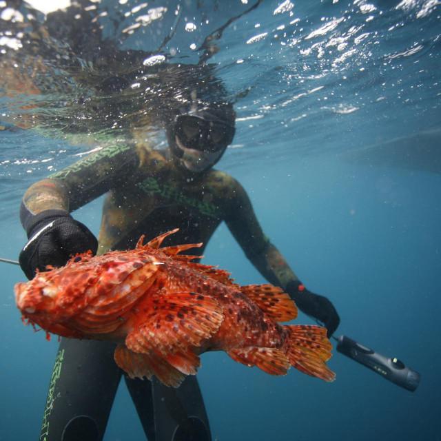 Ovakvu su ljepoticu ulovili Trogirani