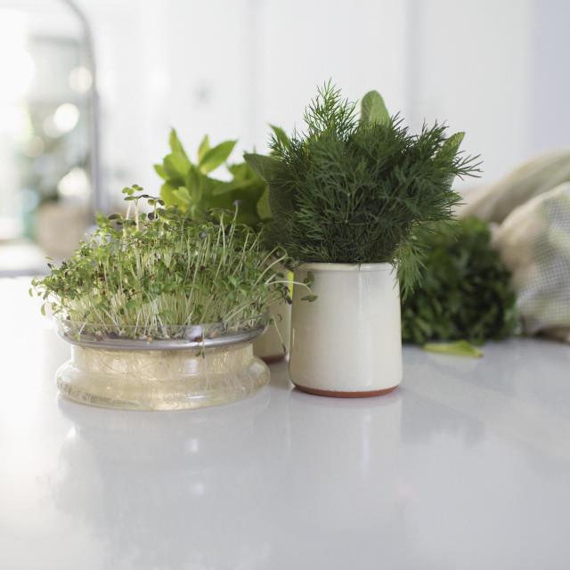 Začinsko bilje u kuhinji