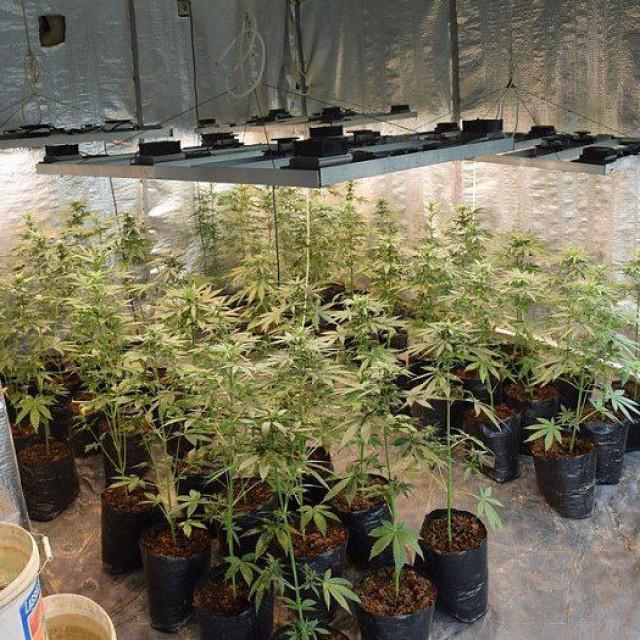 Marihuana u Obrovcu