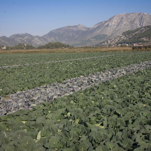 Država potiče upotrebu domaćeg stajskog gnojiva s 215 eura po hektaru