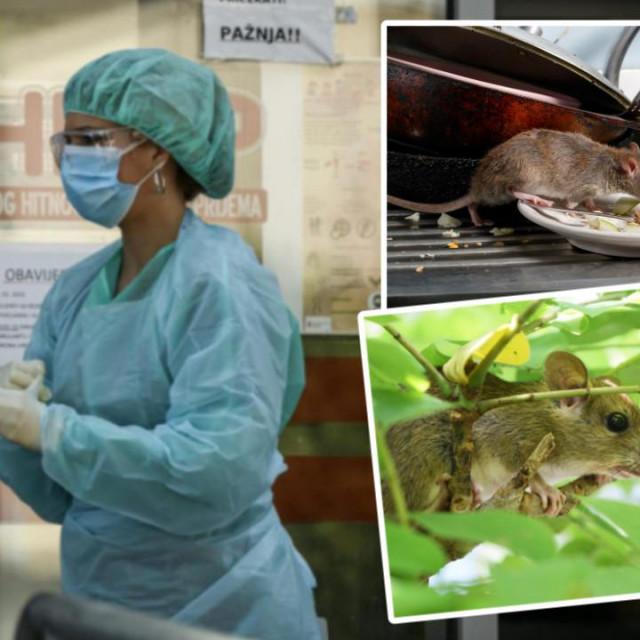 U šibenskoj bolnici nedavno se liječio pacijent koji je obolio od težeg oblika mišje groznice, bolesti koja je u našim krajevima gotovo pa nepoznata