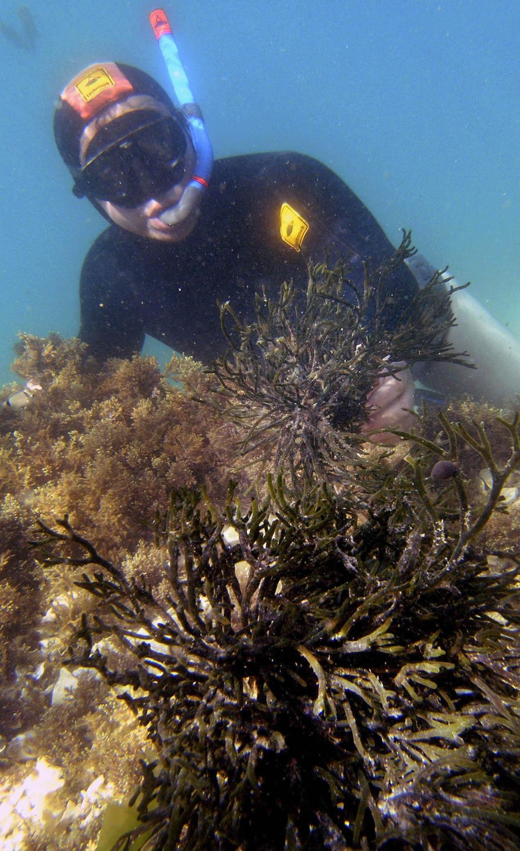 Morske alge su zdrava i ukusna spiza