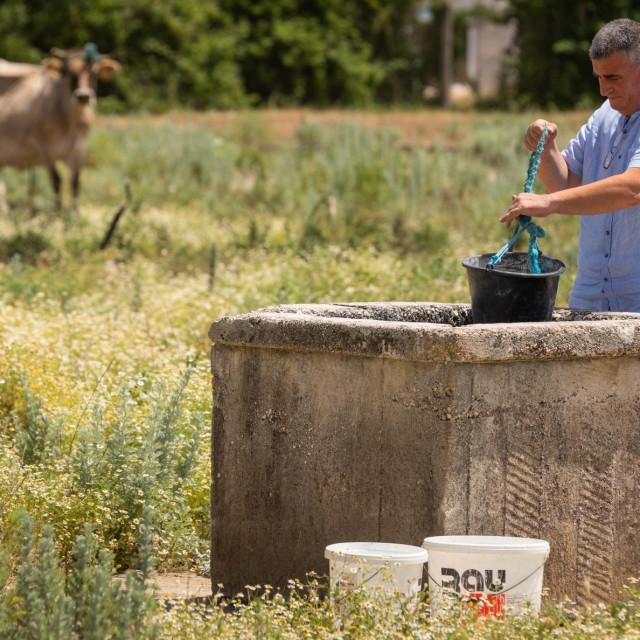 I time se mora baviti - sinjski gradonačelnik u akciji napajanja tuđih krava