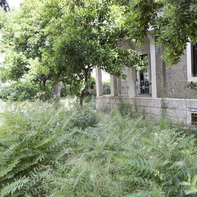 Zapušteno dvorište secesijske vile u Bihaćkoj
