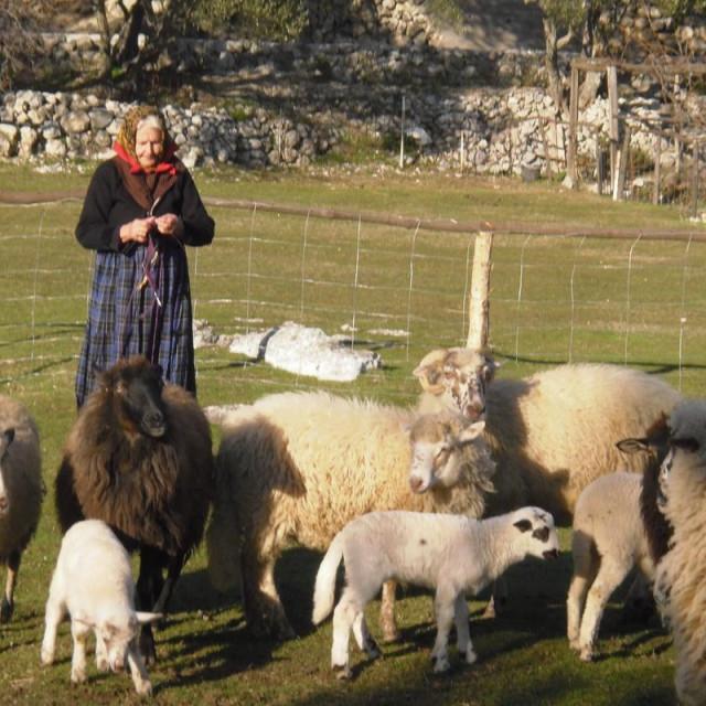 Svi su se okrenuli poljoprivredi pa je teško plasirati domaće