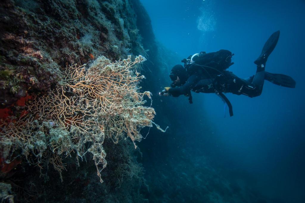 I otočić Tmara je pogođen cvjetanjem mora