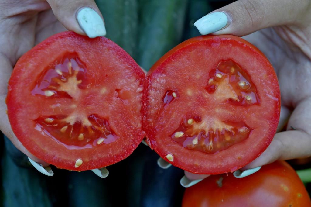 Domaća rajčica