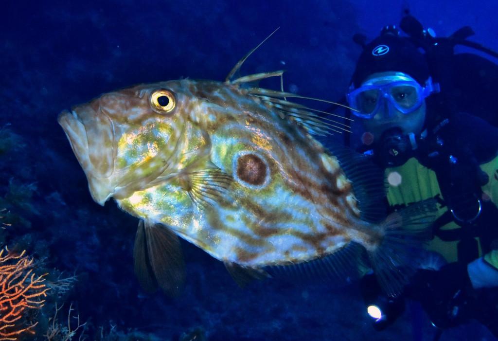 Promjenama u moru ugrožene su tradicionalne vrste u Jadranu<br /> <br />
