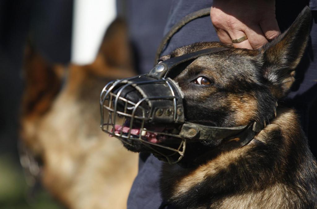 Psa koji se sprema napasti može se prepoznati po nekoliko znakova agresije, a to su režanje, pokazivanje zubi, bjeloočnica...