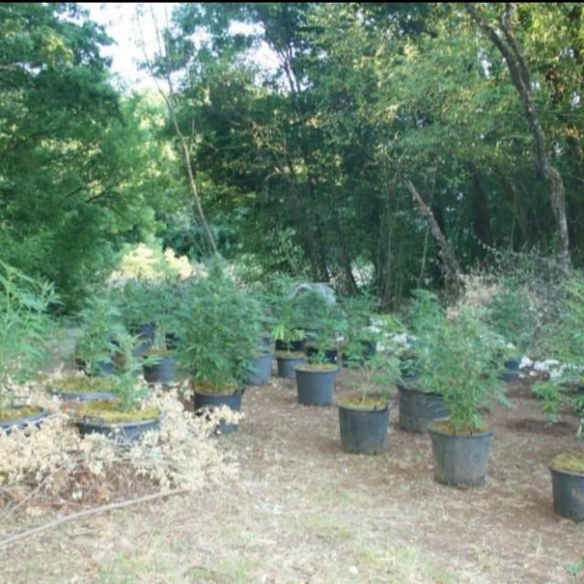 Plantaža je bila uredna i dobro održavana