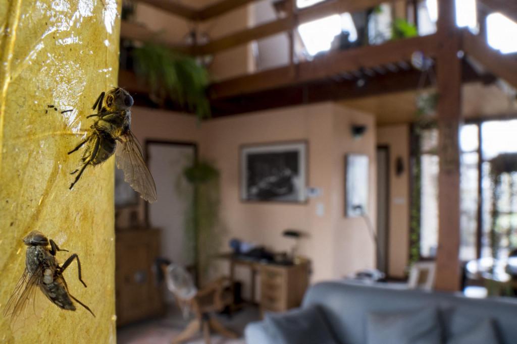 Ljepljive trake protiv muha izuzetno ih privlače