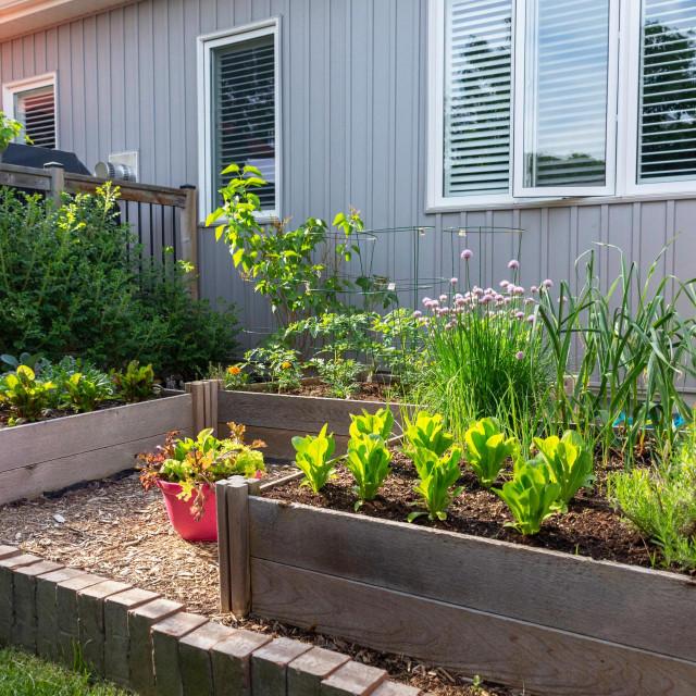 Mali urbani vrt iza kuće