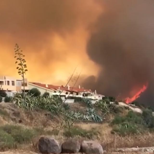 Požari su uništili oko 8000 hektara šume.