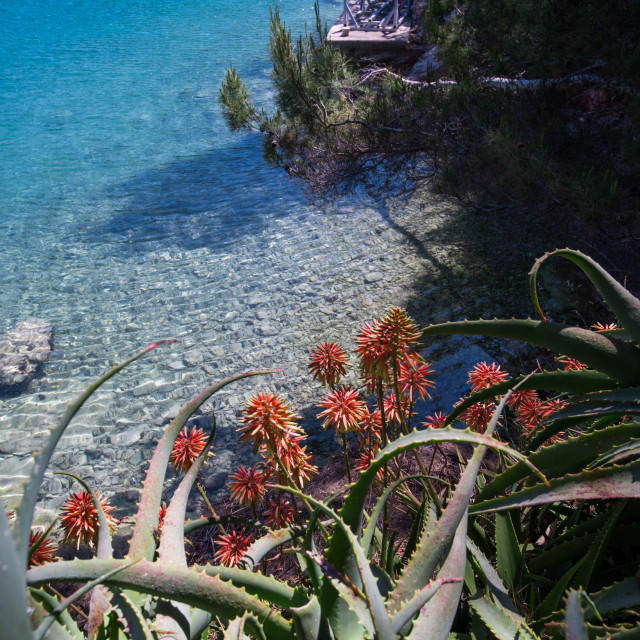 SOLTA, CROATIA - AUG 15, 2015: - Solta is a small island located near the town of Split, one of the most popular tourist destinations on the Adriatic wich remained a place of pristine natural beauty