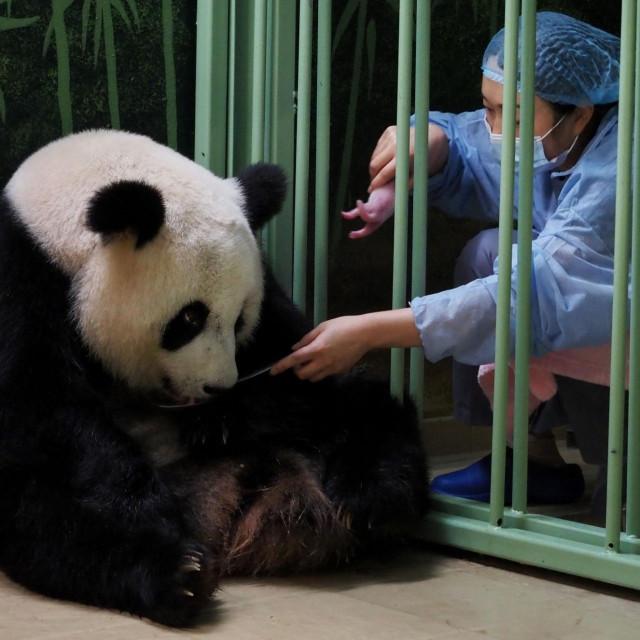 Mama Huan Huan predala je mladunče kineskoj skrbnici