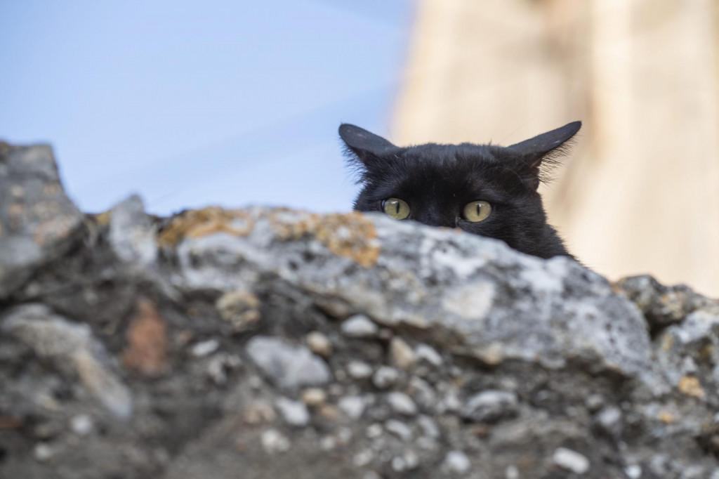 I mačke imaju svoj dan