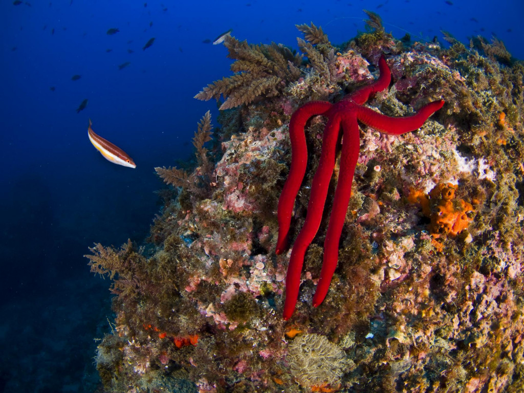 Sea star, underwater photograpfhy