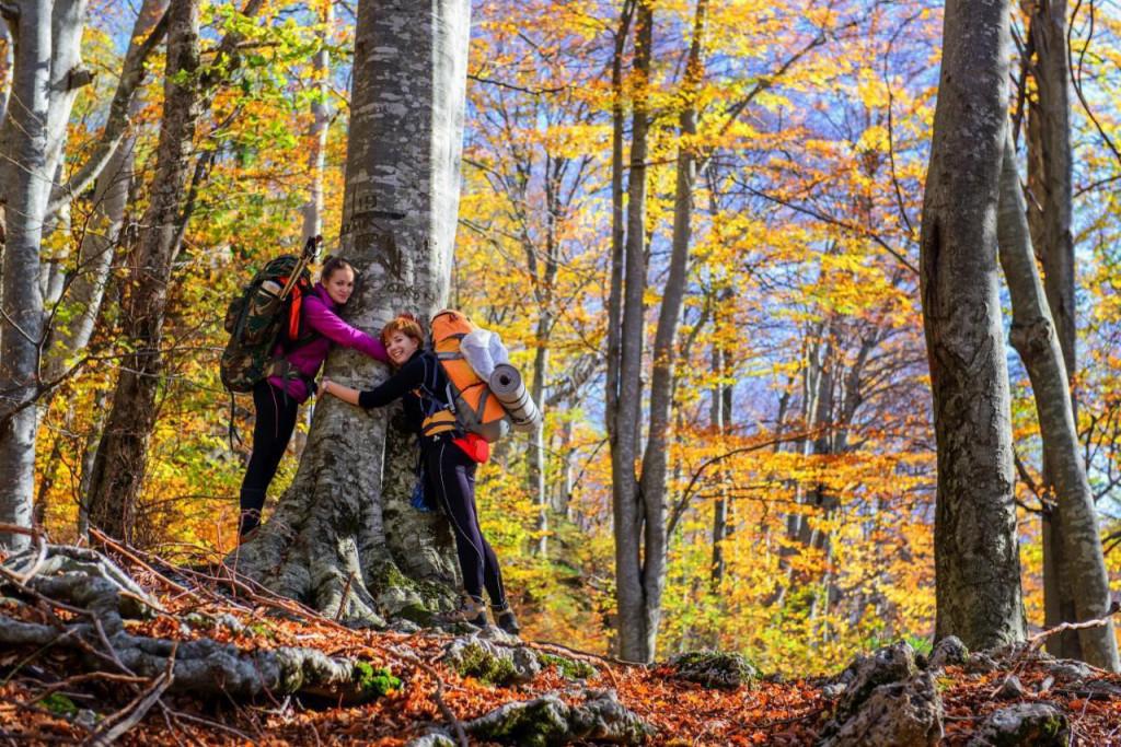 Bukova šuma u NP Paklenica
