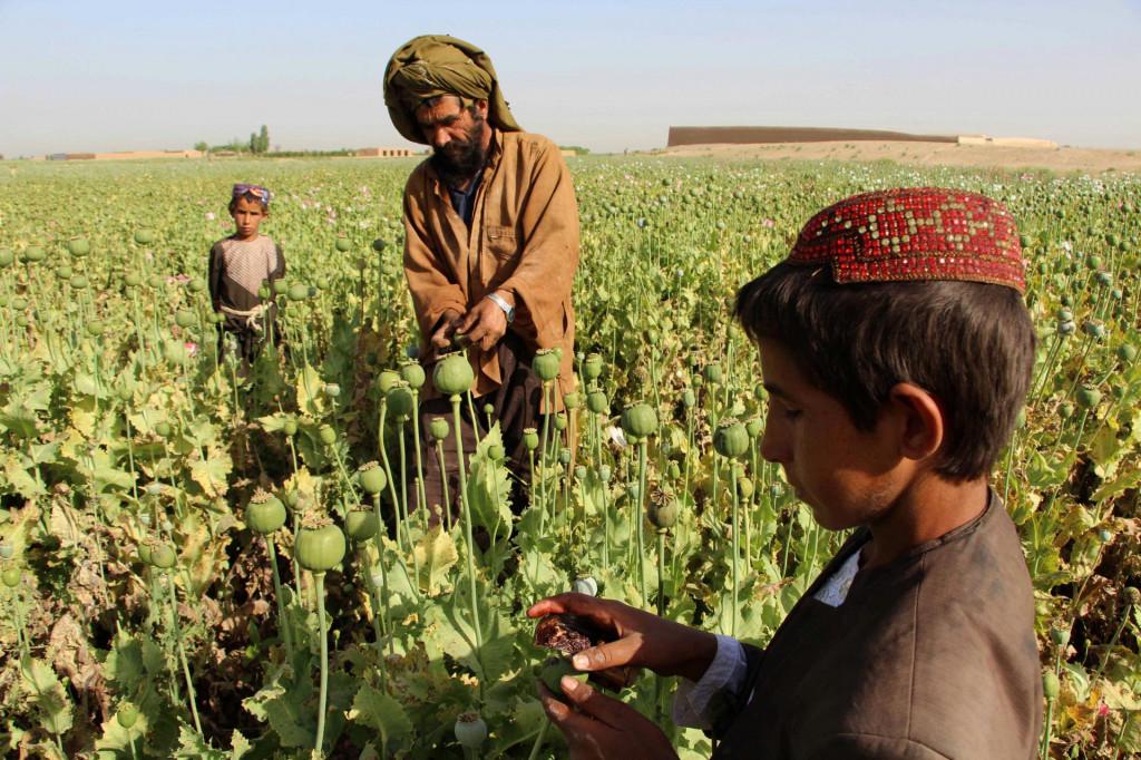 SAD je uzalud utrošio milijarde na uništavanje polja opijumskog maka
