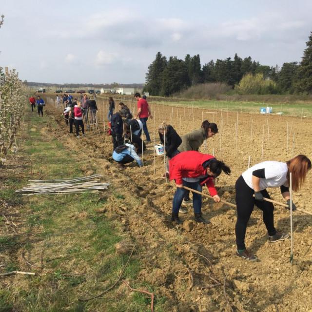 Banka gena autohtonih sorti vinove loze na Baštici kod Zadra