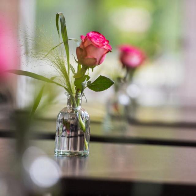 Obavezno isperite vazu i napunite je svježom vodom nekoliko puta tjedno