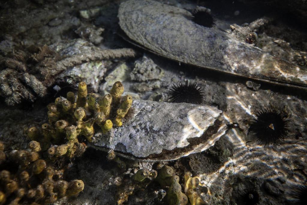 Pomor periski u Malostonskom zaljevu
