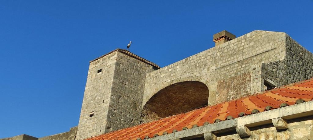 Na proputovanju na jug roda se zaustavila na dubrovačkim zidinama