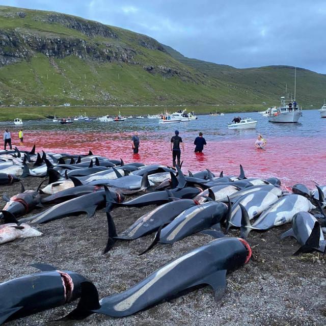 Krvavi prizori s Farskih otoka