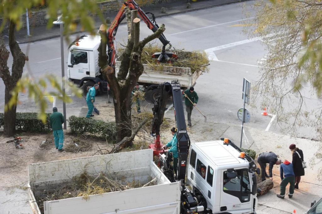 """Mnoge je građane iznerviralo """"popravljanje"""" situacije u Foši... ipak, stabla su danas """"došla na svoje"""""""