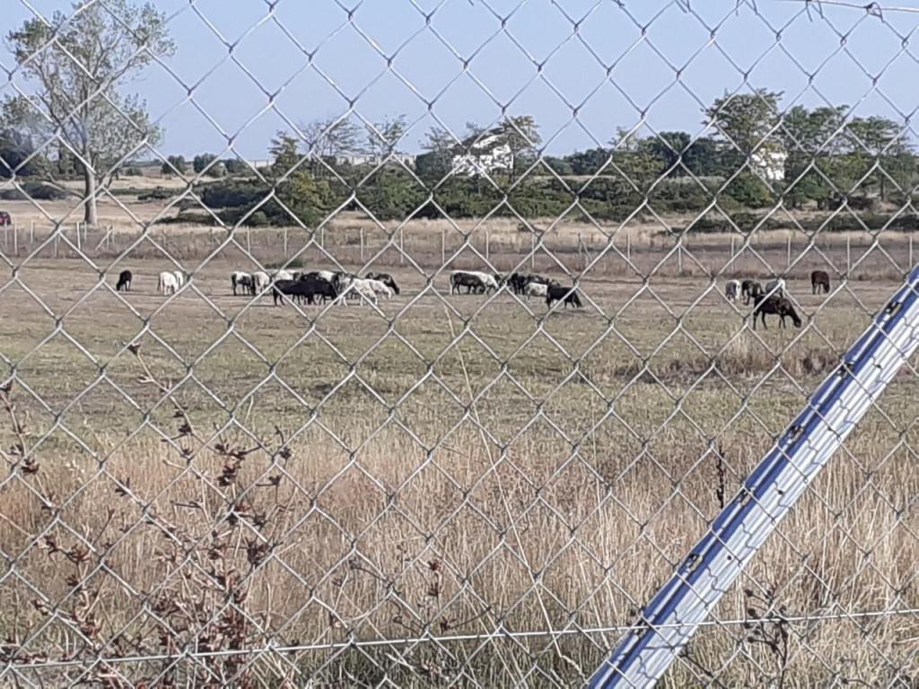 Na ograđenom terenu budućeg Edukacijskog centra u Zemuniku borave - ovce<br />