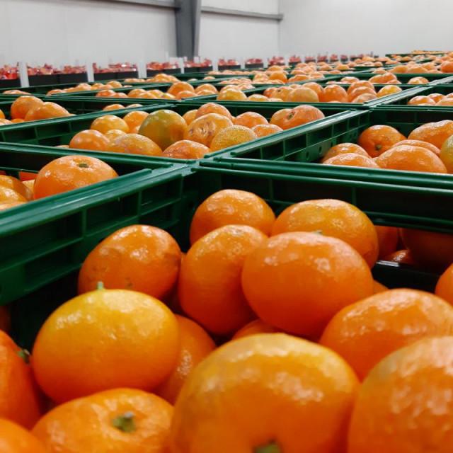 Epidemiološke preporuke u sprečavanju širenja COVID 19 infekcije u sezoni berbe mandarina