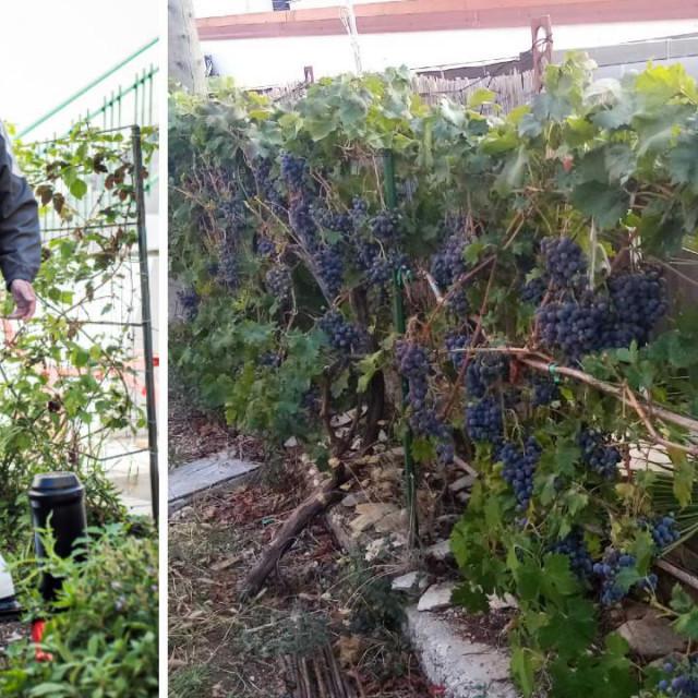 Inovator Vukša i njegova loza rekorderka u crničkom vrtu