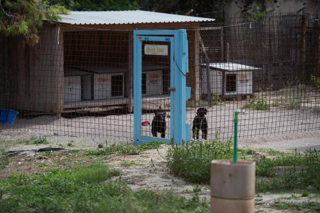 Bageri rasciscavaju privatno zemljiste koje okruzuje zadarski azil za pse, a volonteri u azilu su zabrinuti zbog opasnosti od pada stabala na zivotinje
