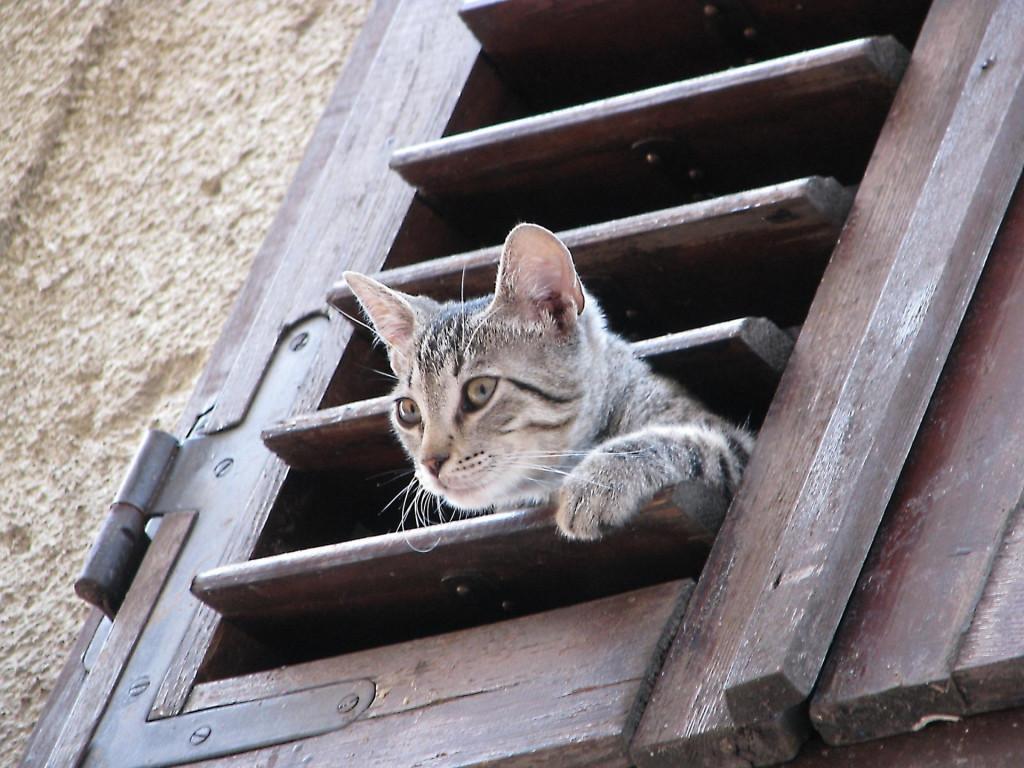Pustite me vanka, vapila je maca iz kuće na Gorici